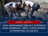 Casa Arrombada Mosquito Aedes